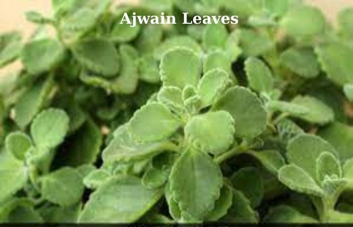 Ajwain (1)