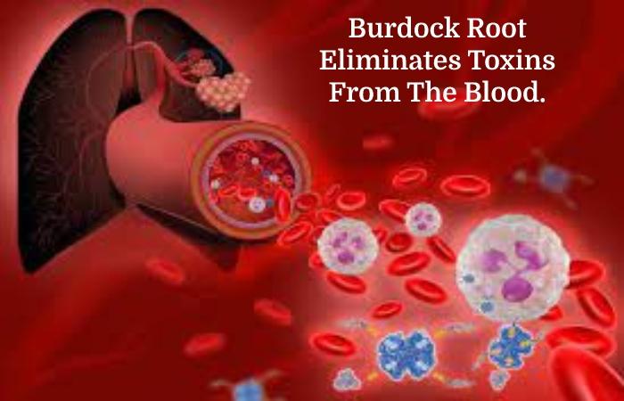Burdock Root (2)