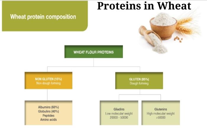 Wheat (3)