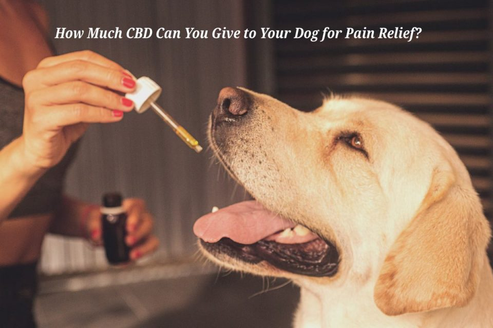 how much cbd can you give to your dog for pain relief_